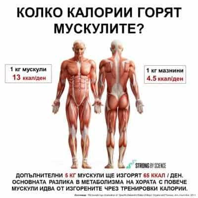 Колко калории горят мускулите?